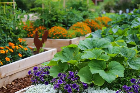 Persistence and Pay-off of Gardening